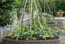 Trellis / Creative ways to support your plants.