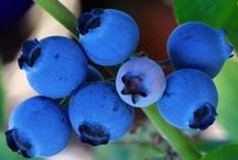 Growing Fruits / Everything to do with growing fruits.