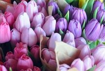 Spring & Flowers