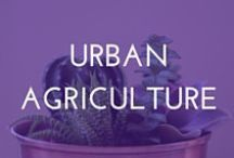 Urban agriculture / Buzz has been growing around urban agriculture. Inspired by our line of beekeeping and gardening products