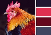 Rooster Love / by Kelly Schneider
