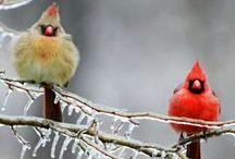 Love my feathered friends / by Jill Siepka