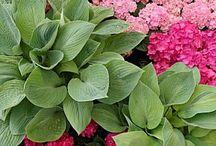 {Garden Love} Plants / by Jen Baird-Wieringa
