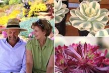 Succulent Celebrities and Enthusiasts