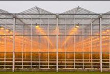 Greenhouses/Westland project / by Annelies de Haan