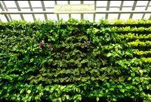 Вертикальное озеленение / Экологичность, изысканность, здоровье - ключевые составляющие философии Greenwalls. На 100% украинский производитель систем вертикального озеленения.