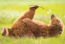 Wonderful animals! / So precious creatures! / by LouLou Rosa