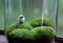◆ M Y _ L I T T L E _ C O M P A N Y / Work, Inspirations, Photography...