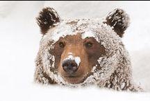 Favourite bears