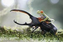 bichinhos / pequenos animais, insetos! / by Damiria Machado
