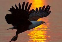 """águias de Arnaldo / Arnaldo significa: """"olhos de águias""""! / by Damiria Machado"""