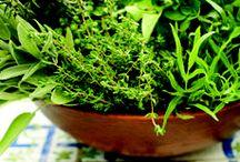 Growing Herbs Indoors / Tips on Growing Herbs Indoors