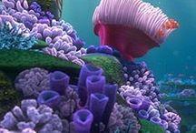 tropical / corais de recifes / by Damiria Machado