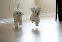 Dogggiiieee :-)