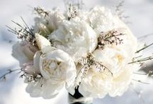 Wedding Bouquets / by Deb T