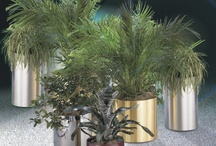 Metal Planters and Plant Containers