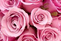 Jolies Fleurs et Bouquets délicats.