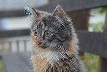 Kittens *.*