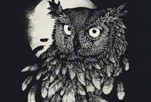 Owl :3