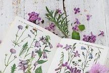 Beautiful Botanicals / The benefits and Beauty of Plants in Every Day Life. Art, photography, Decor, Weddings. Beautiful Botanicals