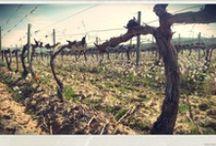 Vino / Wine / Todo lo relacionado con el mundo del vino.