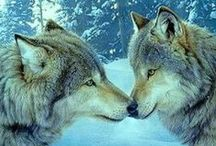 Beasts / Wolves
