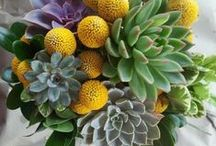 Succulents in bouquets