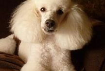 Dolly's Do's / My pet pooch, if i ever feel like a haircut change