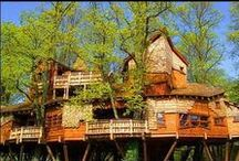 Tree Houses / Here are some incredible tree house designs that range from functional to fanciful, sustainable to strange and affordable to incredibly expensive. / by Harmony Rose