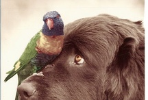 Animalitos / animals