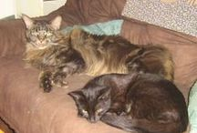 Humbi und Nazuna / Meine Katzis.