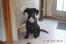 Mato als Hundesitter / Meine tierischen Kurzbesucher