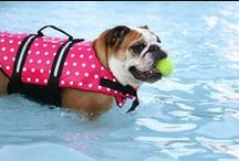 Summer Fun w Your Pets!
