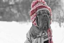 Winter Fun w Your Pets!
