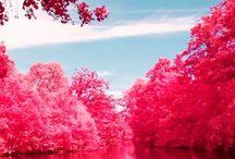 Nature & Landscapes / o(^▽^)o