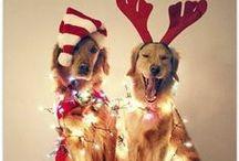 Christmas!!! / All things Christmas