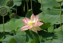 Flore / Photos de fleurs du Forum de Faaxaal (https://faaxaal.blogspot.com/) Cactus - Orchidées - Arbres - Fleurs de toutes sortes