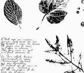 SU - French foliage