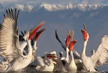 Seabirds / You are developing day by day. Now you are on the way to be a competent in Marine life