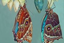 Butterflies / Visit nature, just for butterfly watching