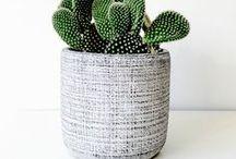 Cactus mode