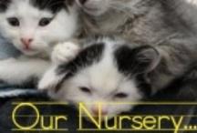 Our Nursery / Summer time is kitten season!