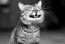 Tee Hee  =) / A good laugh and a long sleep are the best cures for anything.        - Irish Proverb / by Joy Pesigan-Wilson