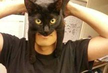 my  cat  / Cat stof