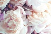 Petals. Flowers.