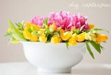 Plantas/Jardins/Ervas