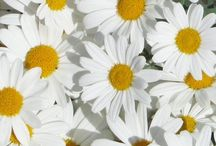 Flower♡
