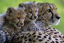 Big Cats Kingdom
