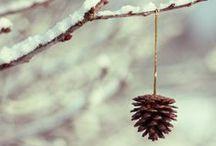 Cones / by Anastasia