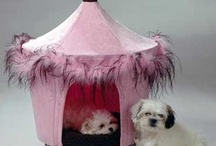 Chic Pet Products / by Doggy in Wonderland